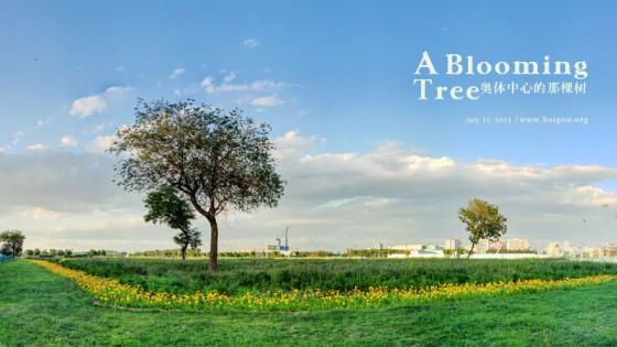 奥体中心的那棵树 a blooming tree